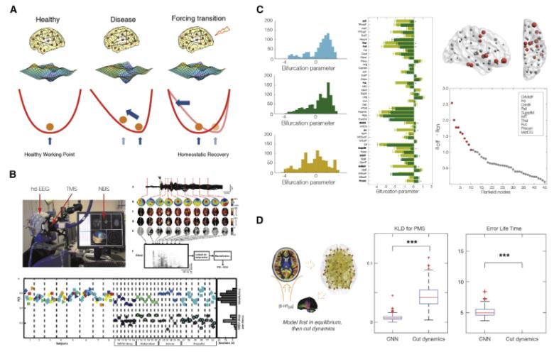 Whole Brain Models