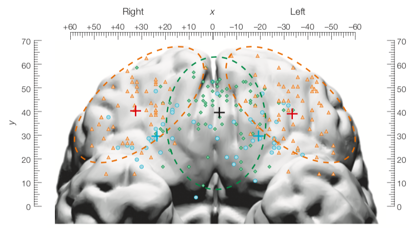 The human orbitofrontal cortex