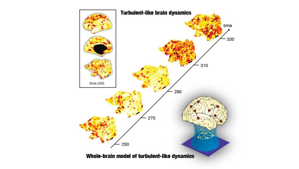 Turbulence in the brain